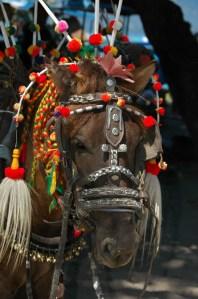 Gili Air - Horse