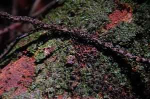 Bukit Lawang - Ants