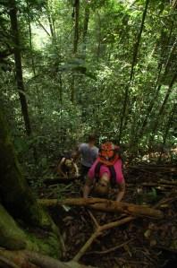 Bukit Lawang - Climbing and Trekking