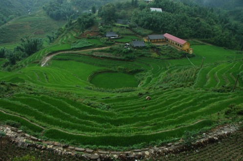 Sapa - Terraced Rice Paddies 1