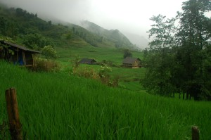 Sapa - Foggy Rice Paddy