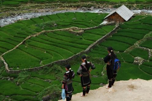 Sapa - Terraced Rice Paddies 2